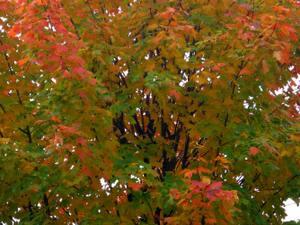 Fall_foliage