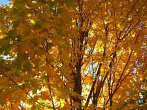 Tree_3_2