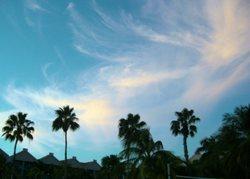 Palm_trees_3